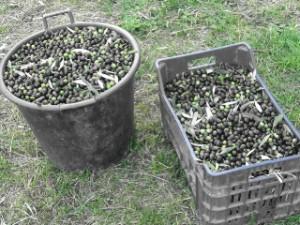 olivebaskets