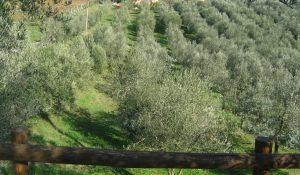 Amelia, Italy
